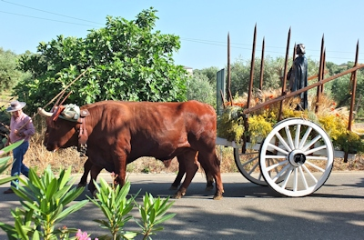 San Isidro on ox cart