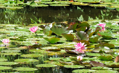 Giverny - Monets garden water lillies