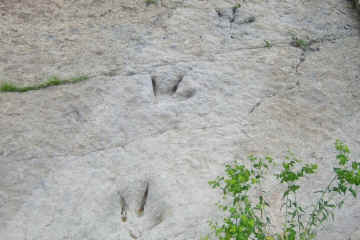 Dinosaur footprints at Enciso