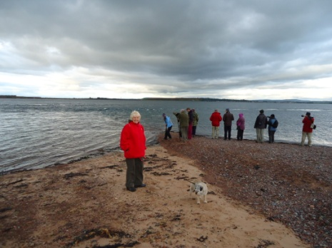 Dolphin watching at Chanonry Point
