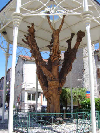 Carved elm tree at Le Caylar