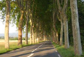 Typical French road near Revel
